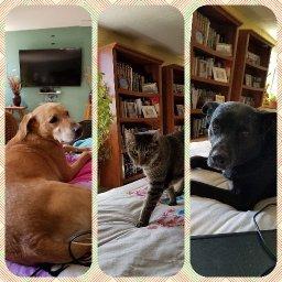My Dogs, My Prayers, My G-d