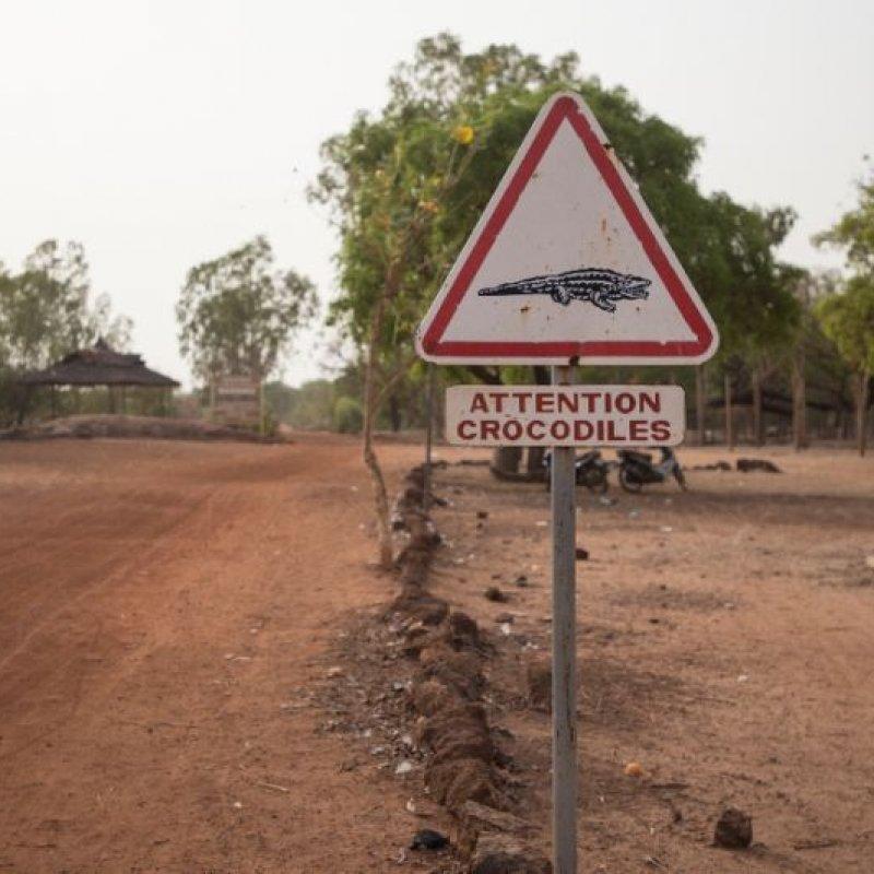 Sacred Crocodiles?