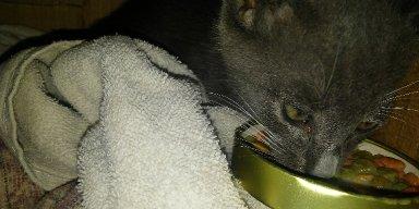 New Cat Yavatu